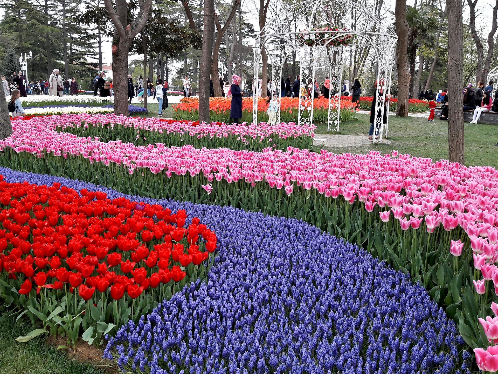 Piantare I Bulbi Di Tulipani uno spettacolare festival di tulipani - parextour